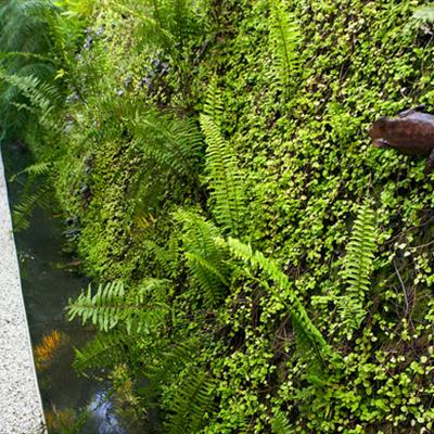 Sculptured frog rests on the vertical garden wall
